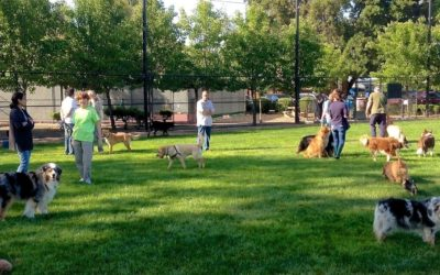 Dog Park Survey – Need your input